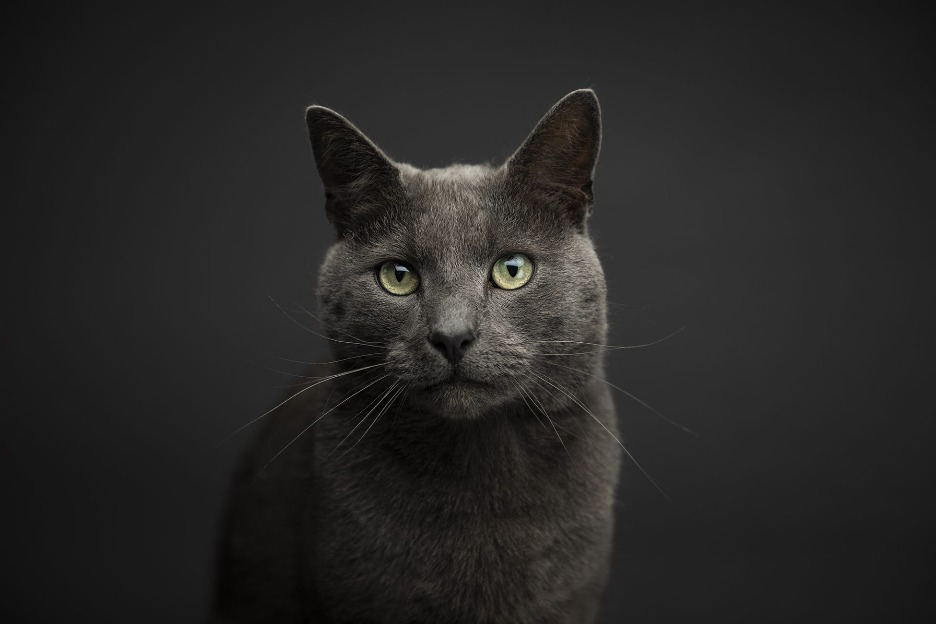 Pet cat photography